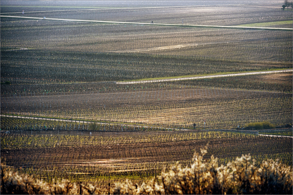 Volnay, march 2012