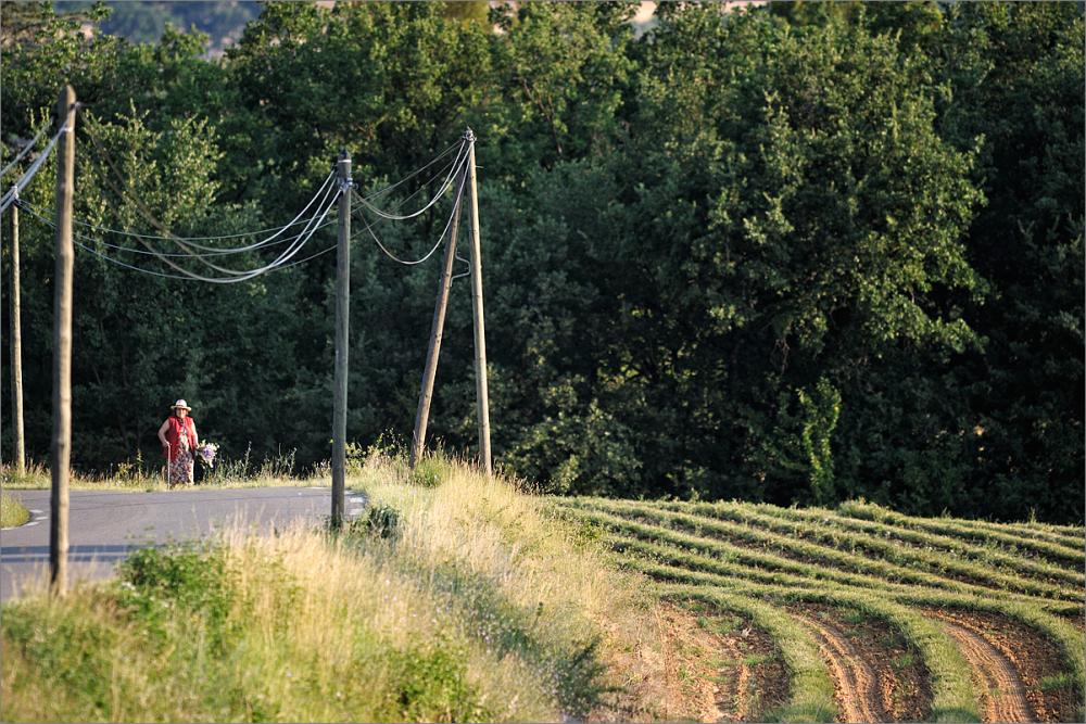 Roussillon, july 2012