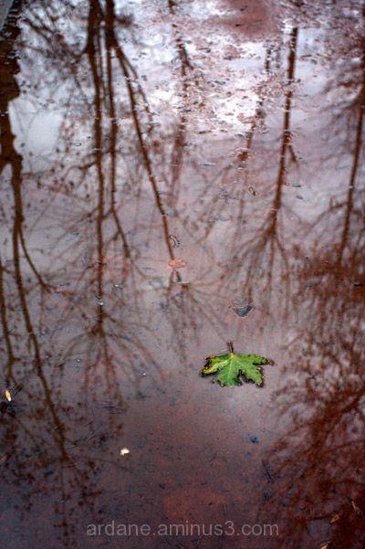 fallen green leaf