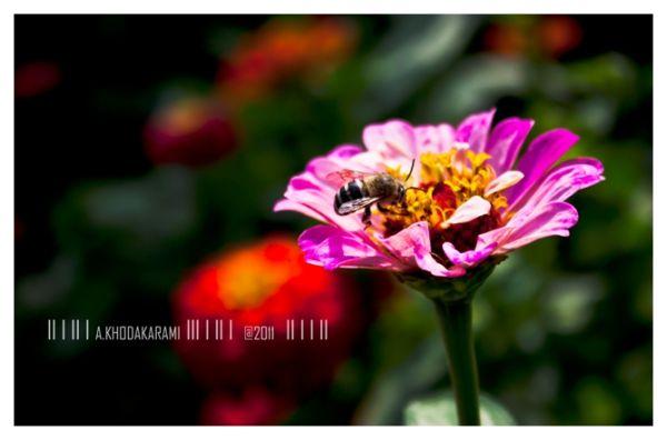 sting flower bee