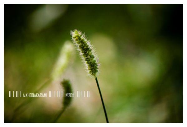 growth green bushehr iran