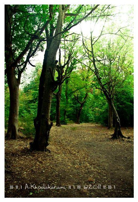 greenway bushehr iran golestan forest
