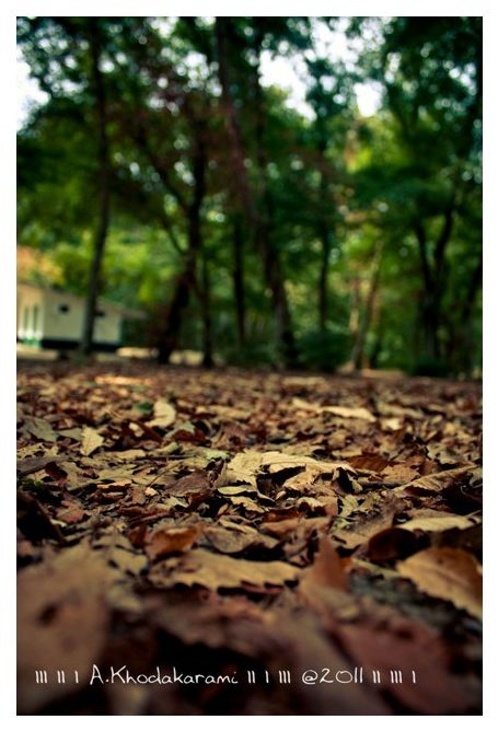 oldleaves bushehr iran golestan forest