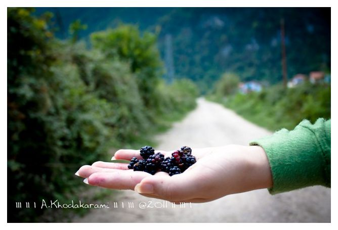 Raspberry bushehr iran noshahr