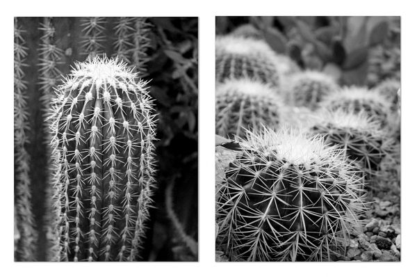 cactus collage