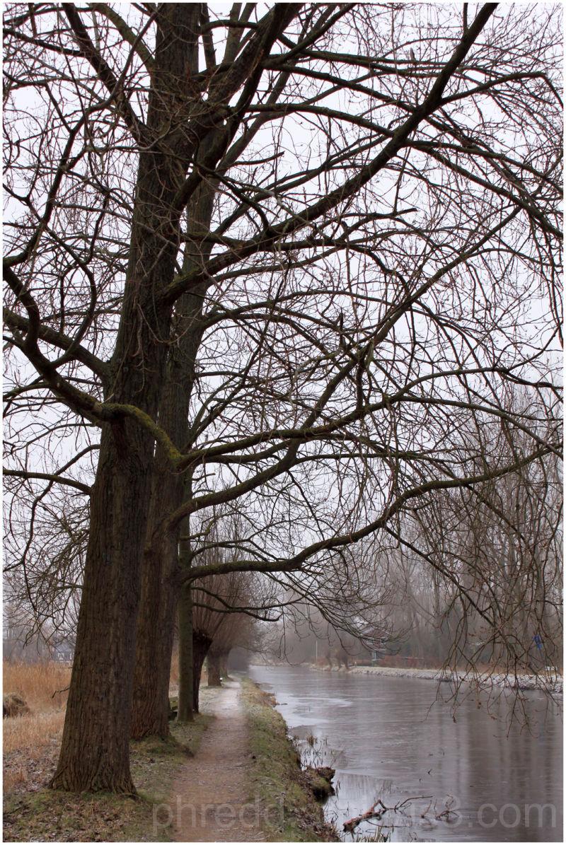 Bomen Achterland Delft