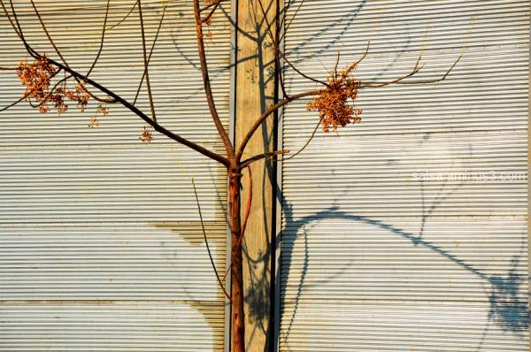 Last days of Autumn . 1