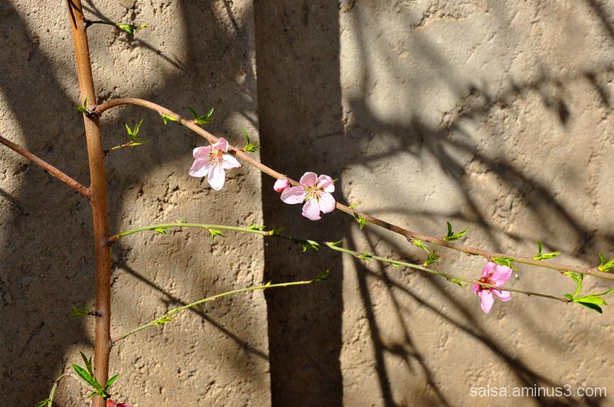 Spring Line - 4