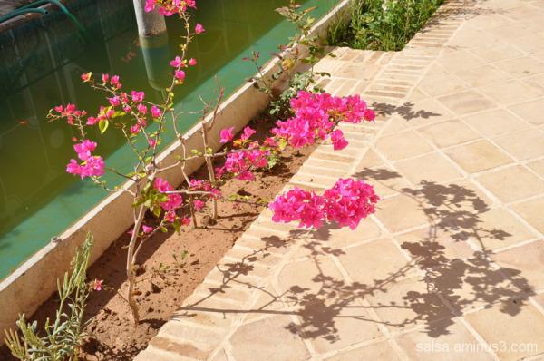 Spring line -9 ... Dear Soil