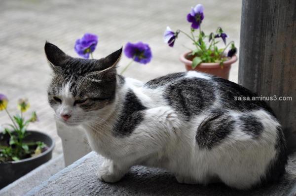Cat  &  Spring