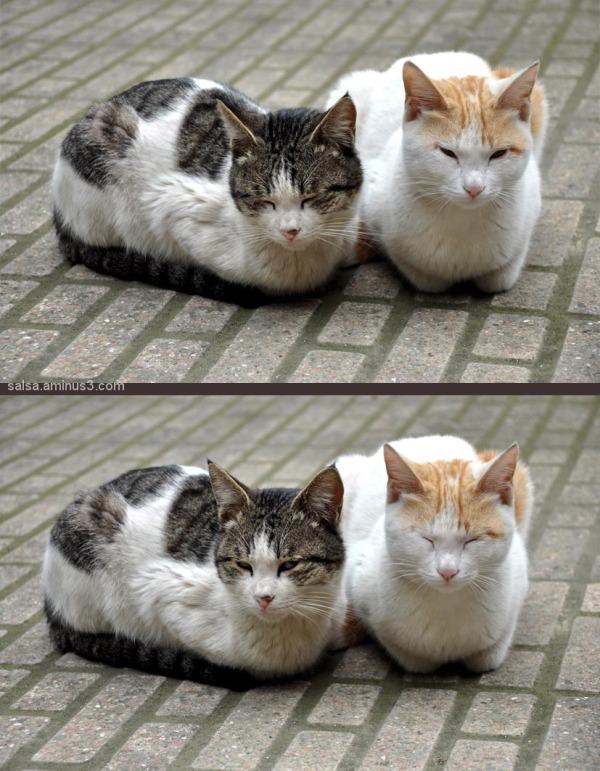 Cat & Wife