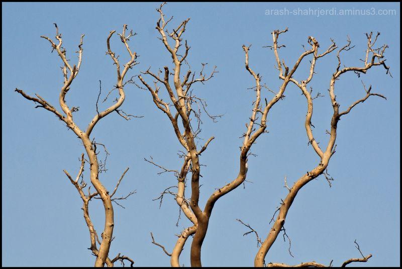 Tree . . .