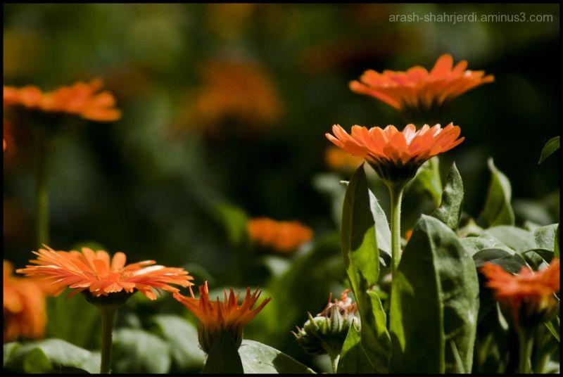 Flowers . . .