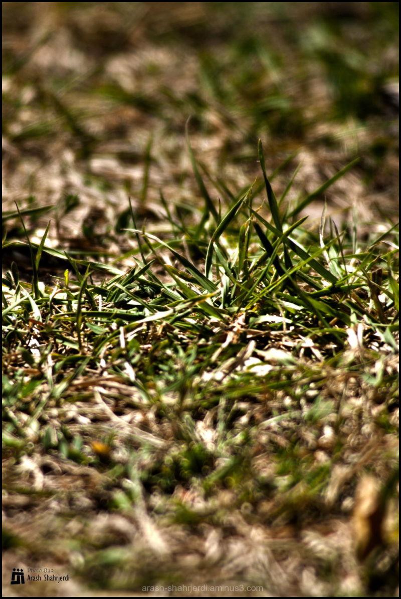 Grass, Arash Shahrjerdi