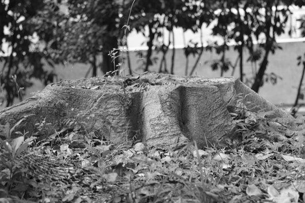 Borken Tree Trunk
