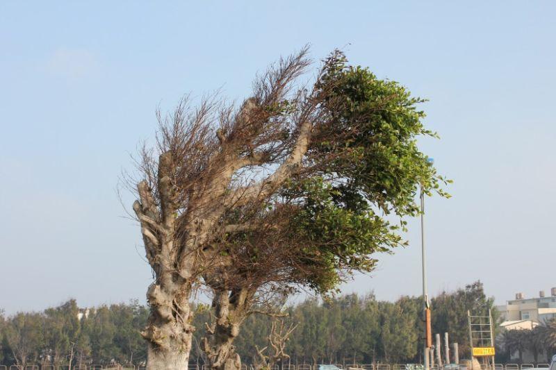 leaf on tree got blowed by wind