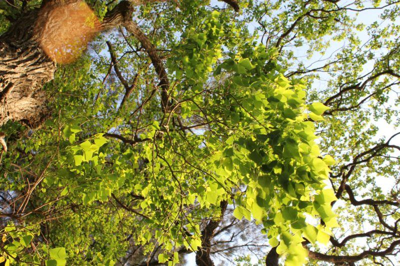 Bright Green in the Sunshine