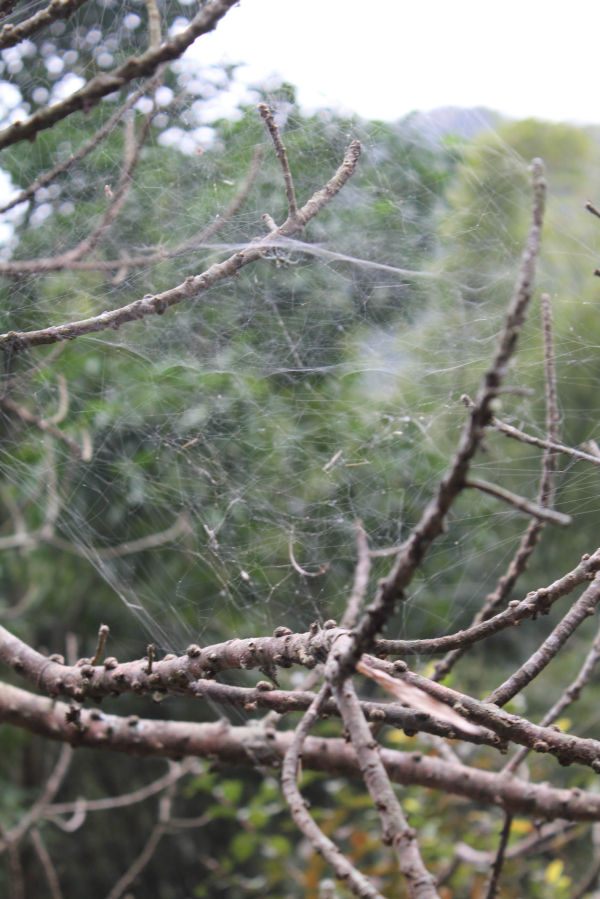 LOOK CLOSELY AT THE SPIDER WEBS
