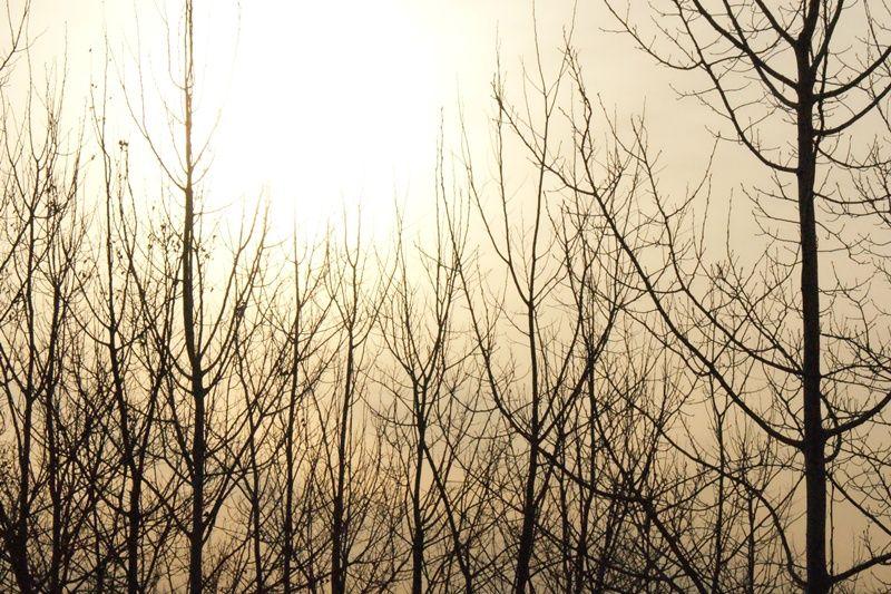 Silhouette in the Sun
