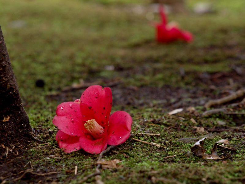 Fallen Reds