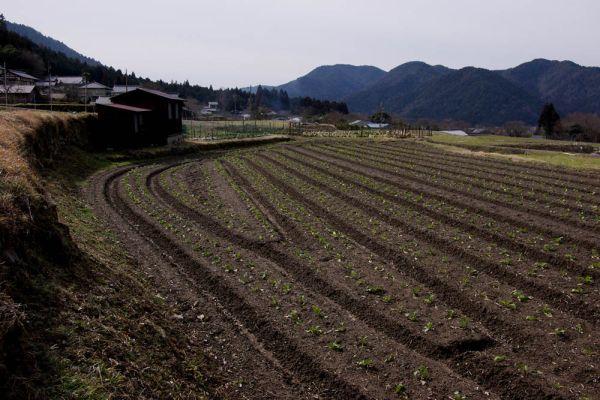 Lines of Ridge