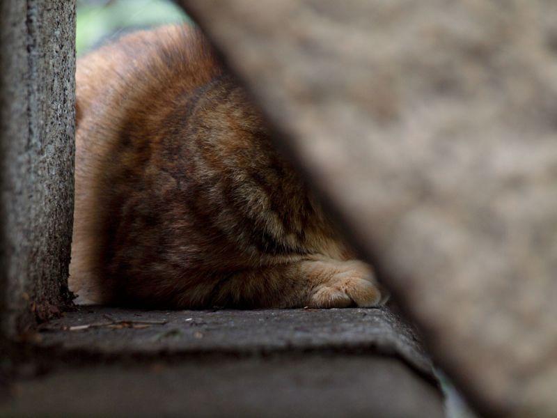 A Cat's Paw