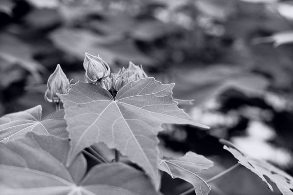 Leaf & Bud