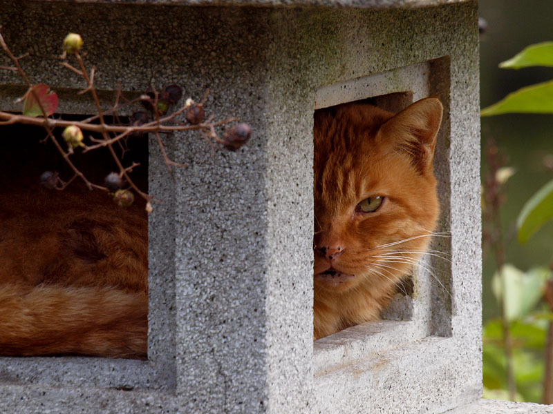 Cat In A Stone House