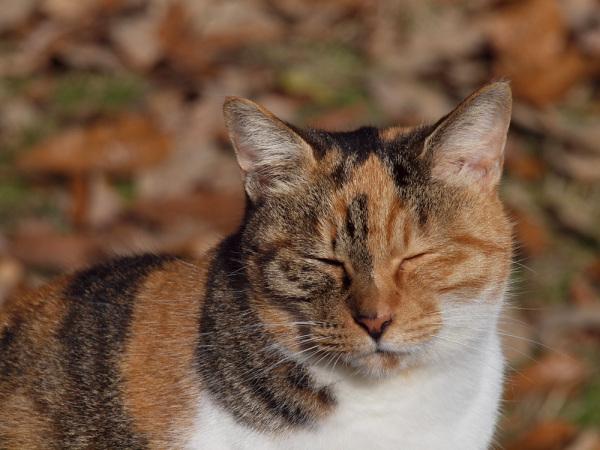 kyoto japan cat eyes