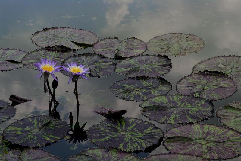 Sacred Color Of Purple