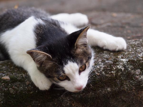 Handsome Kitten - 2 -
