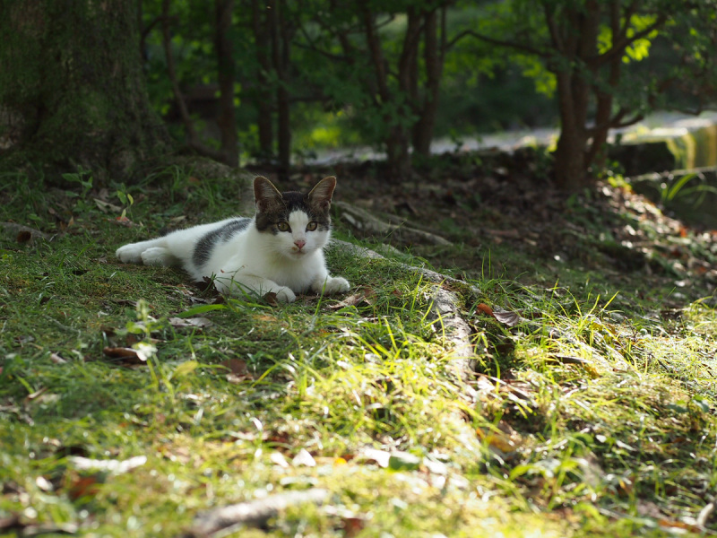 Handsome Kitten - 3 -