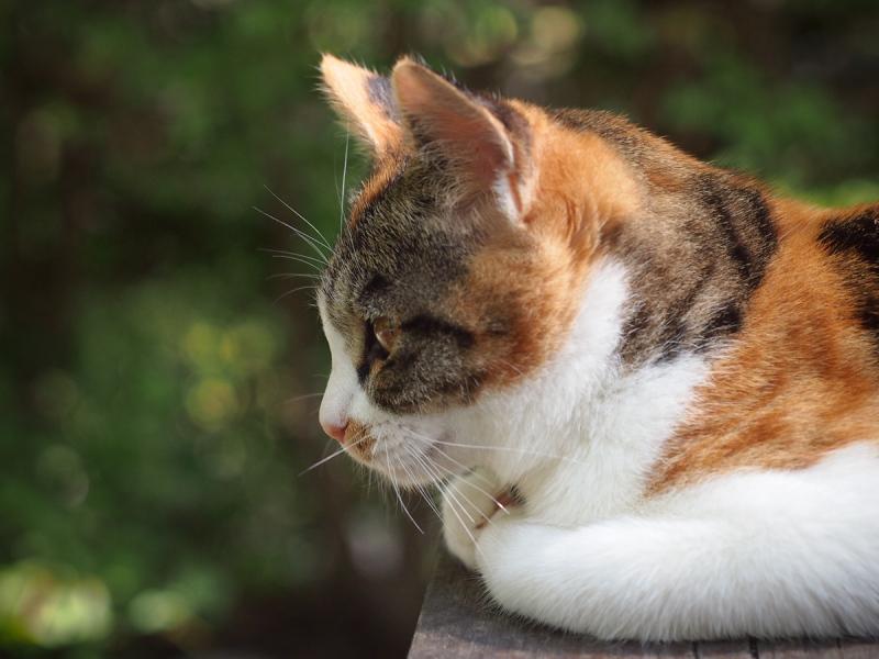 Handsome Kitten - 5 -