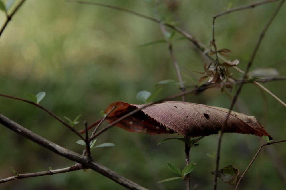 Fallen Leaf - 3 -