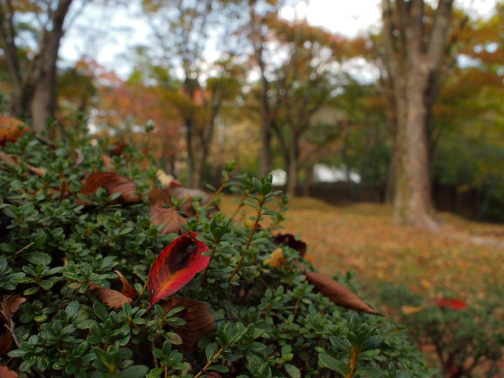 Fallen Leaf - 5 -