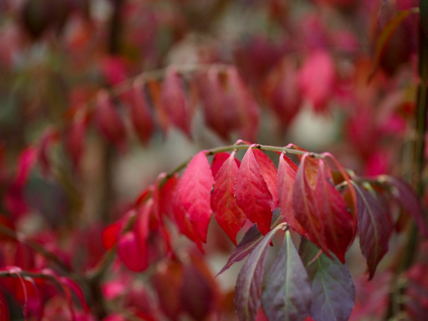 One of Autumn Colours