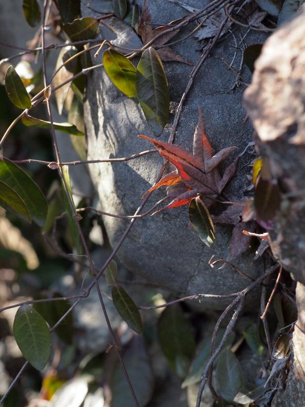 Fallen Leaf - 8 -