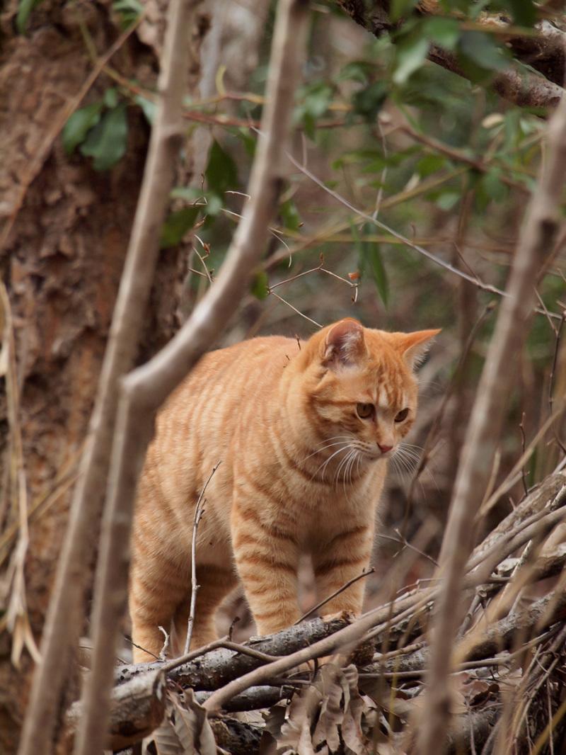 Cat In A Woods