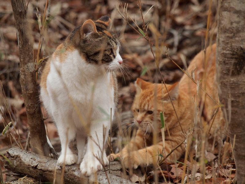 Cat In A Woods - 2 -