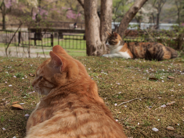Lazy Afternoon - 105 -