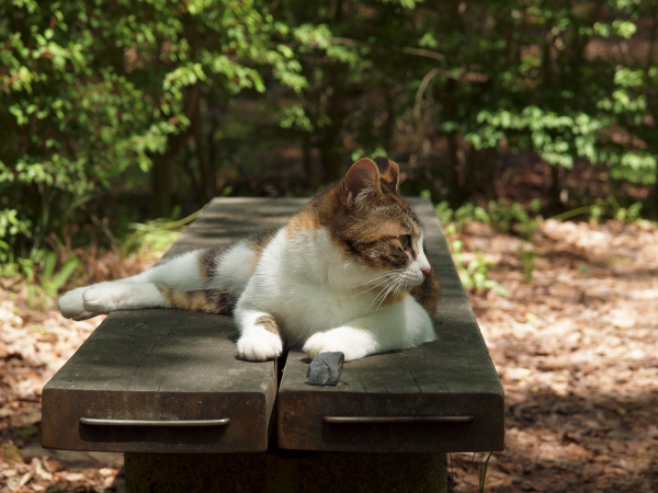 Lazy Afternoon - 126 -