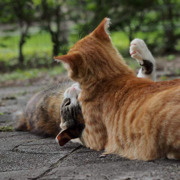 Siblings' Mock-fight - 3 -