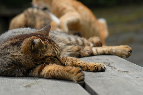 Lazy Afternoon - 172 -
