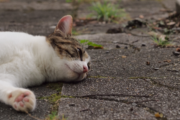 Lazy Afternoon - 193 -