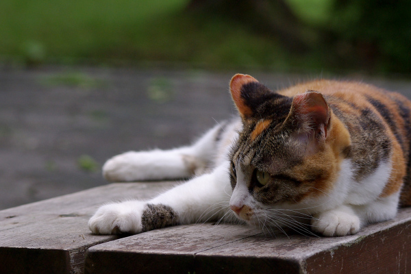 Lazy Afternoon - 195 -