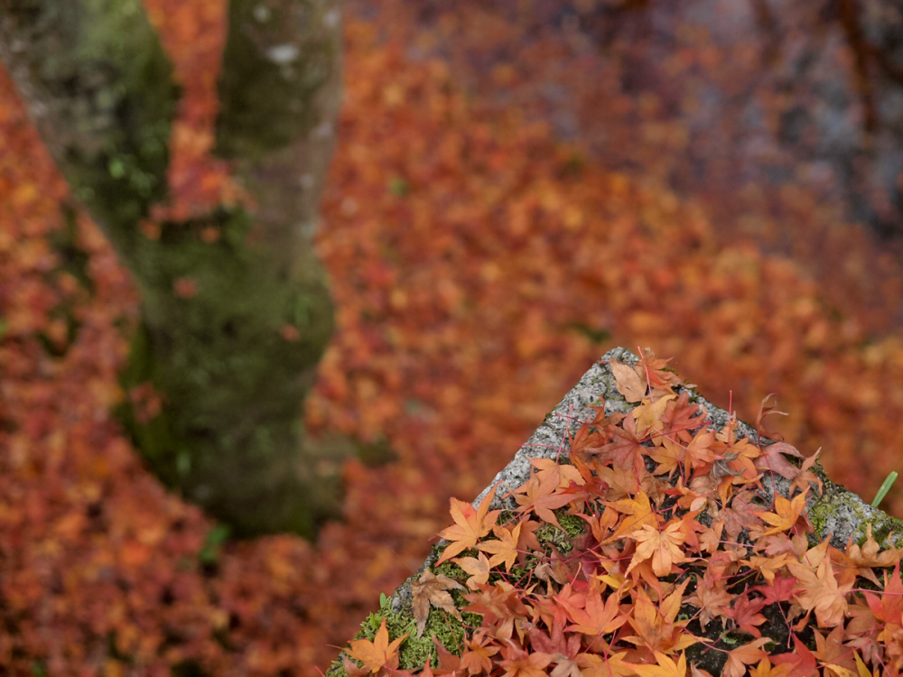 Autumn Colors - 21 -