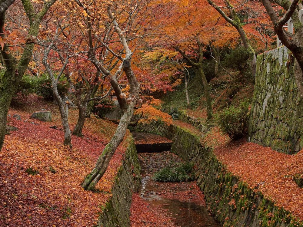 Autumn Colors - 22 -