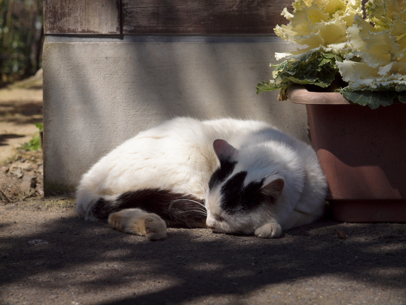 Lazy Afternoon - 287 -