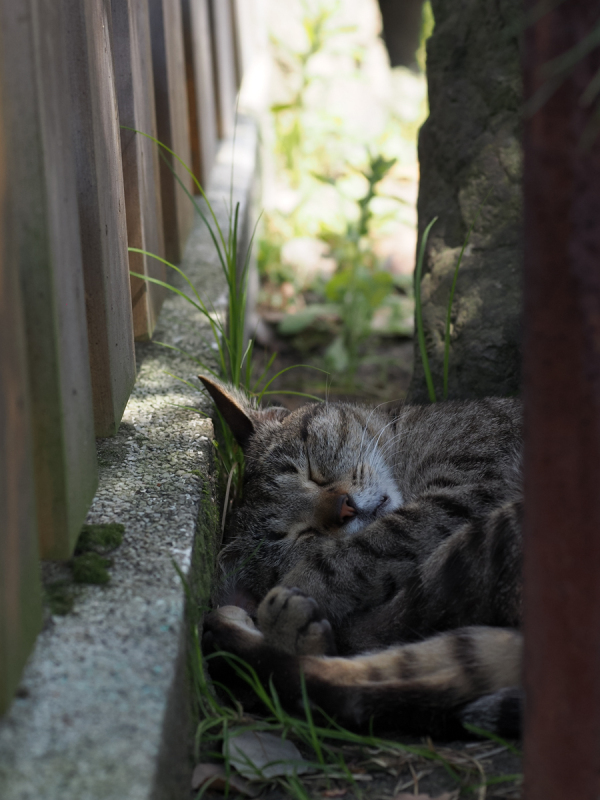 Lazy Afternoon - 307 -