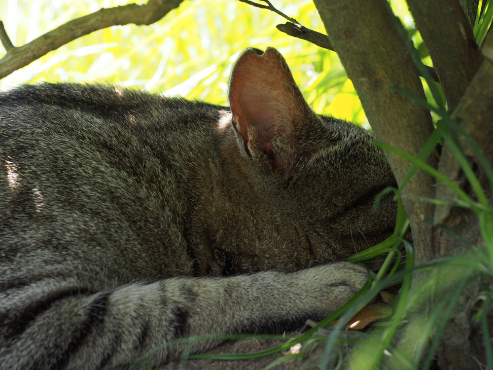 Lazy Afternoon - 316 -